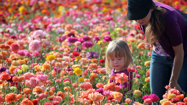 in photos carlsbad flower fields beach for baby. Black Bedroom Furniture Sets. Home Design Ideas